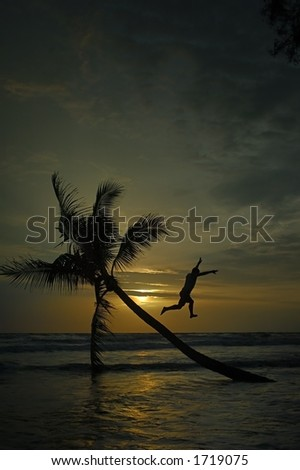Jump from a palm tree - stock photo