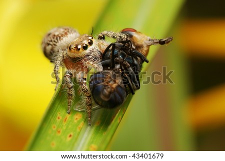 Jumper with prey