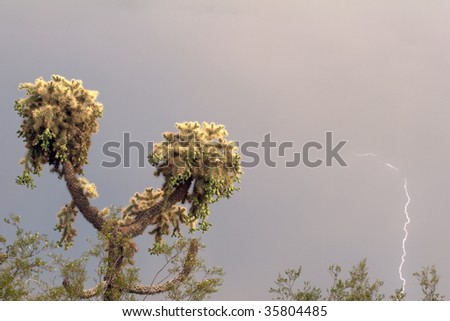 Jumping Cholla cactus with a strike of lightning. - stock photo