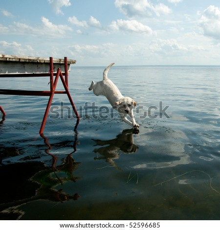Jumping dog - stock photo