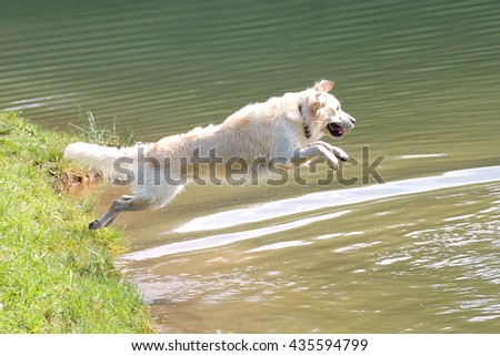 Jumping dog in water - stock photo