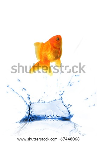 JUmping golden fish - stock photo