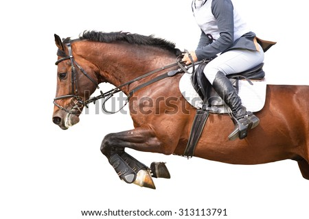 Jumping horse isolated on white. - stock photo