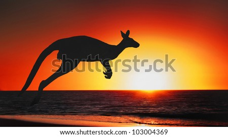 Jumping kangaroo at sunset of australia - stock photo