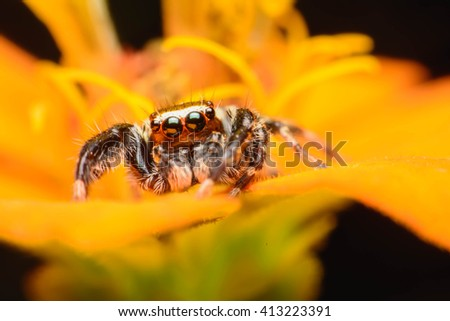 Jumping spider on the flower
