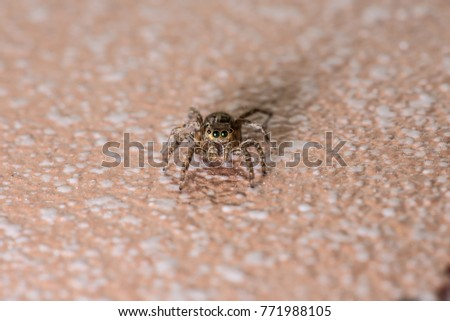 Jumping spider stay on the ground somewhere