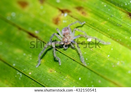 Jumping spiders.