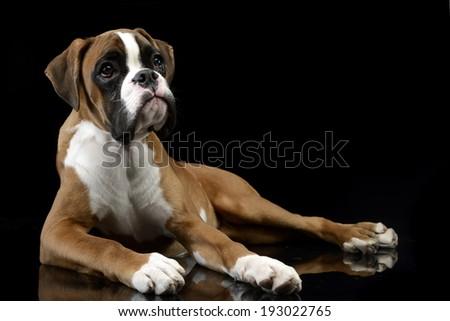 Jung Boxer lying on the shiny floor in dark studio - stock photo