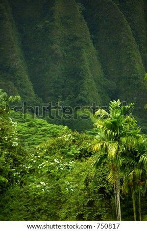 Jungel and mountain at Oahu - stock photo
