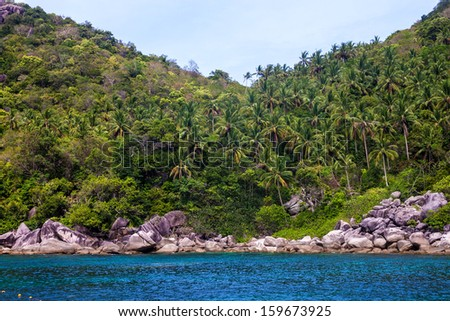 Jungle at Ko Tao, Thailand - stock photo