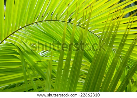 Jungle background - stock photo