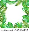 Jungle border blank frame with rich tropical green plants as ferns and palm tree leaves found in southern hot climates as south America Hawaii and Asia with framed white isolated copy space center.  - stock photo