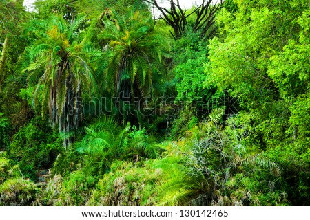 Jungle, bush trees and plants background in Africa. Tsavo West, Kenya - stock photo