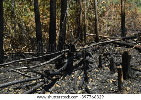 Jungle caught on fire. - stock photo