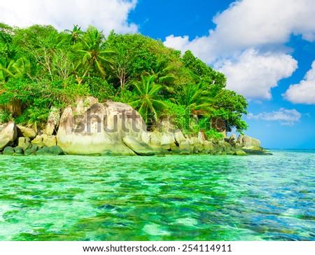 Jungle Dream Palms  - stock photo