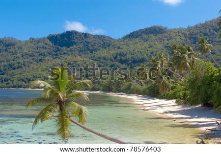 Jungle Dream Summer - stock photo