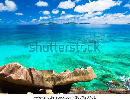 Jungle Dream Summertime - stock photo