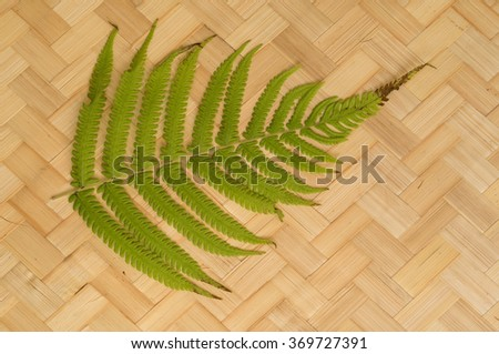 Jungle fern frond with bamboo/rattan woven background. - stock photo
