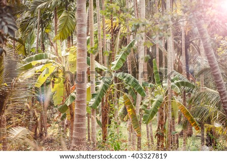 jungle forest palm trees