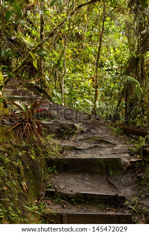 Jungle, forest path, mud steps with wood - stock photo
