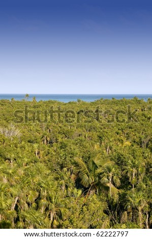 Jungle high view of Mexican jungle - stock photo