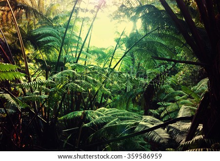 jungle in Hawaii