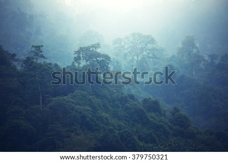 Jungle in Hawaii - stock photo