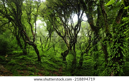 Jungle in Nepal - stock photo