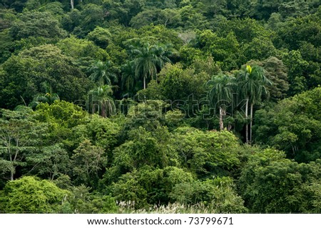 Jungle in Panama - stock photo