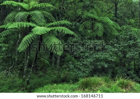 Jungle in Sri Lanka - stock photo