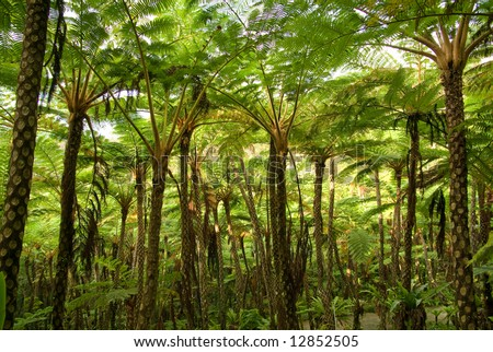 Jungle of tree ferns (cyathea lepifera) in Japan, Asia - stock photo