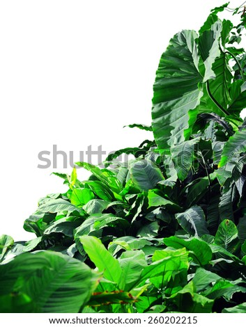 Jungle on a white background - stock photo