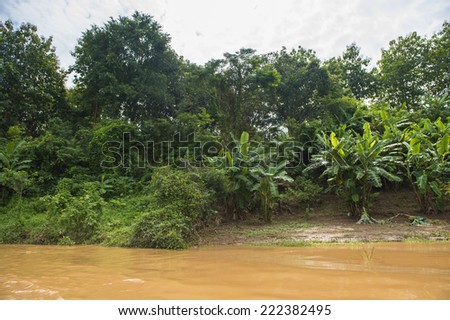 Jungle on the coast of the Mekong river in Asia - stock photo
