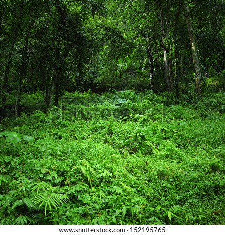 Jungle rainforest background. Dense tropic forest with fern and lush vegetation  - stock photo