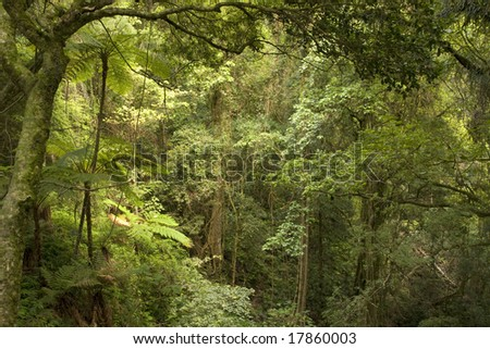 jungle scene with old trees and ferns - stock photo