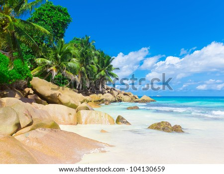 Jungle Shore Palms - stock photo