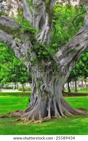Jungle tree in a park in Honolulu - Hawaii - stock photo
