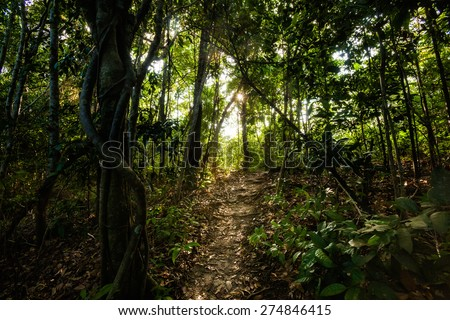 Jungle trekking on tropical island Koh Phangan in Thailand. Nature of south east asia.