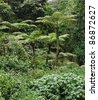 jungle vegetation in Uganda (Africa) - stock photo