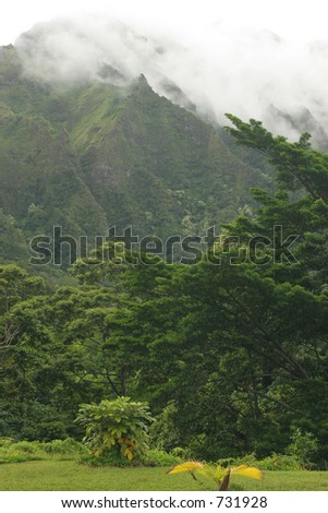 Jungle with mountain - stock photo