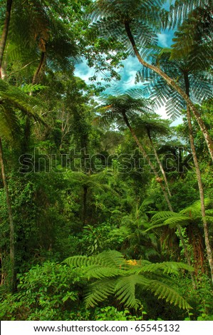 jungle with tree ferns near Kuranda, North Queensland, Australia - stock photo