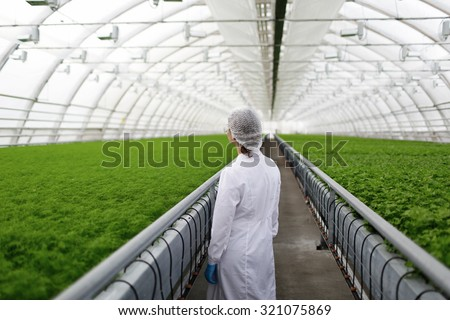 Junior agricultural scientists researching plants and diseases in greenhouse with parsley - stock photo