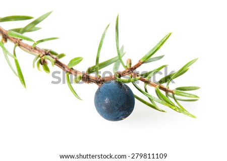 Juniper berries on a white background close-up. - stock photo