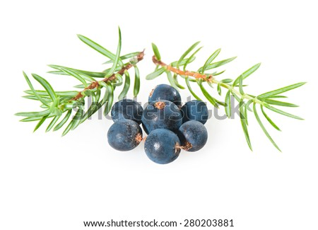 Juniper berries on a white background close-up - stock photo