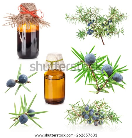 juniper berry and extract isolated on white background - stock photo