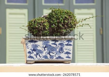Juniper bonsai tree in the garden - stock photo