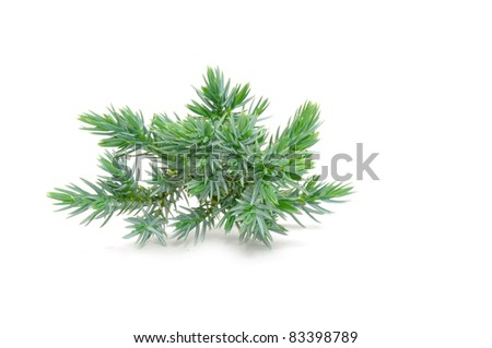 Juniper Branch Isolated on White Background - stock photo