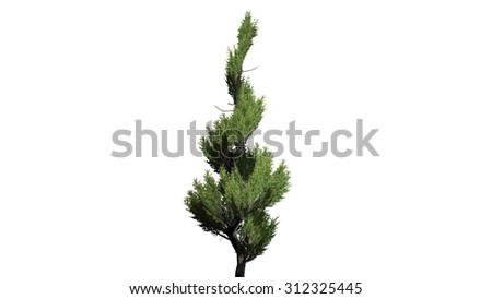 Juniper topiary - isolated on white background
