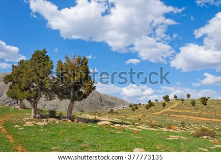 Juniper Tree growing out of the Rosks against the blue sky and white clouds Turkey - stock photo