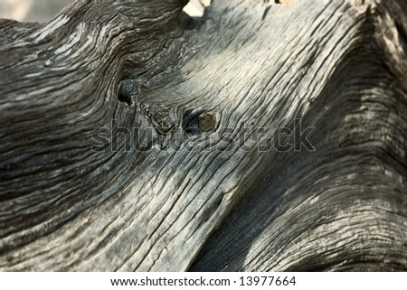 juniper tree texture - stock photo